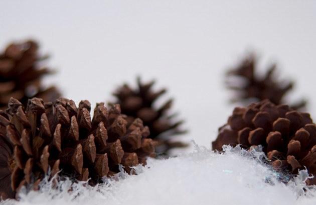 Pine Cones In Snow